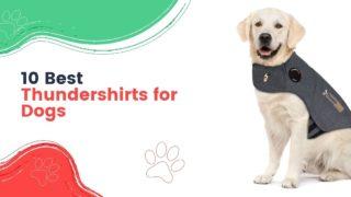 Thundershirts for Dogs