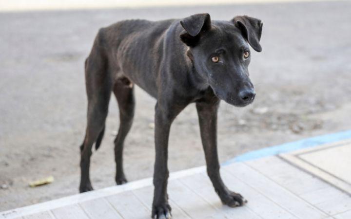 Skinny black dog - I Love Veterinary