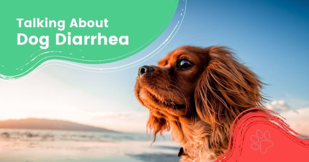 Talking About Dog Diarrhea - I Love Veterinary