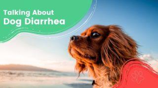 Talking About Dog Diarrhea - I Love Veterinary