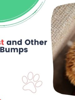 The Cat Cyst and Other Lumps and Bumps - I Love Veteirnary