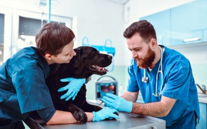 Vet giving injection to a dog with kennel attendant's assistance - I Love Veterinary