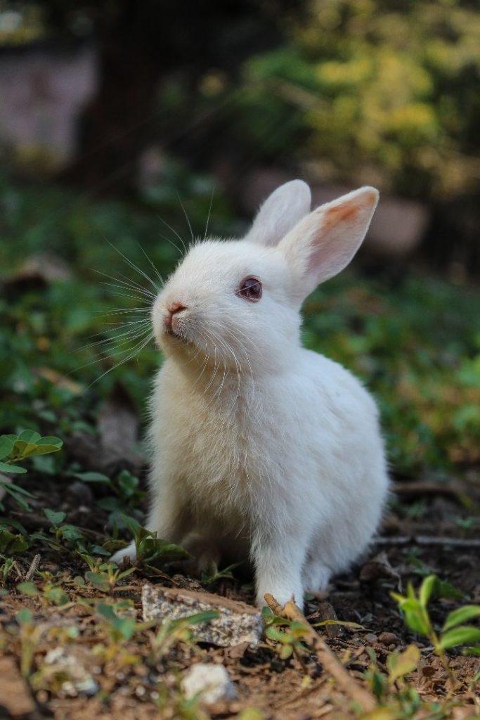 White rabbit in the field - I Love Veterinary