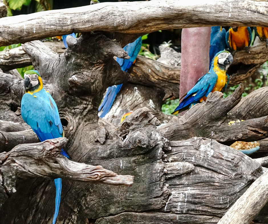 a group of macaw parrots sitting in a tree