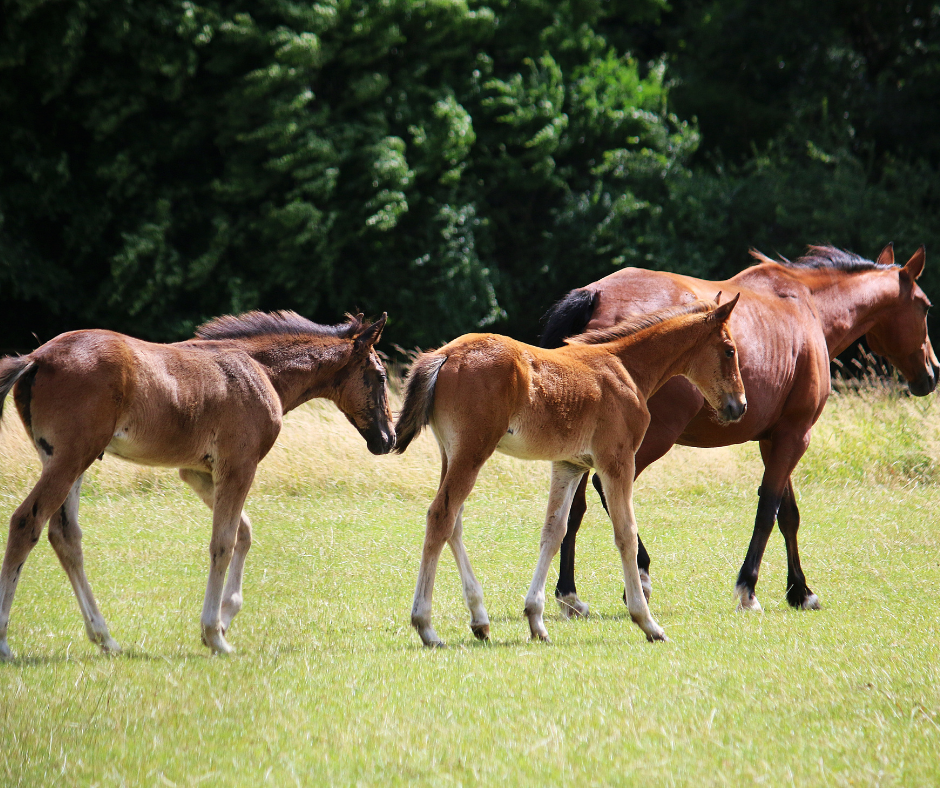 horse with twin foals 1 I Love Veterinary - Blog for Veterinarians, Vet Techs, Students