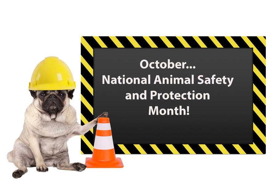 National Animal Safety and Protection Month