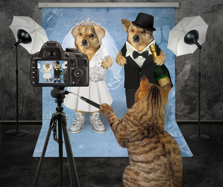 two dogs getting married being photographed by a cat