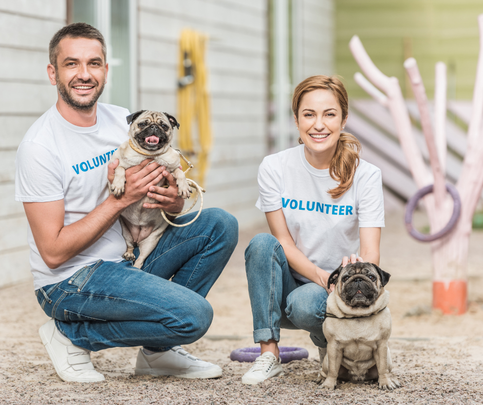volunteers at an animal shelter for dogs
