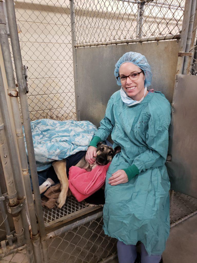 20190117 143305 I Love Veterinary - Blog for Veterinarians, Vet Techs, Students