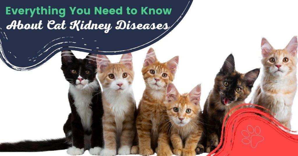 Cat kidney diseases