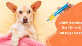 DHPP Vaccine