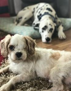 Picture4 I Love Veterinary - Blog for Veterinarians, Vet Techs, Students