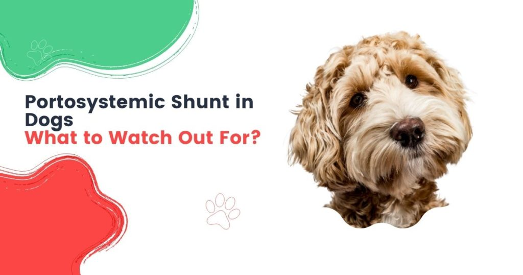 Portosystemic Shunt in Dogs - What to Watch Out For
