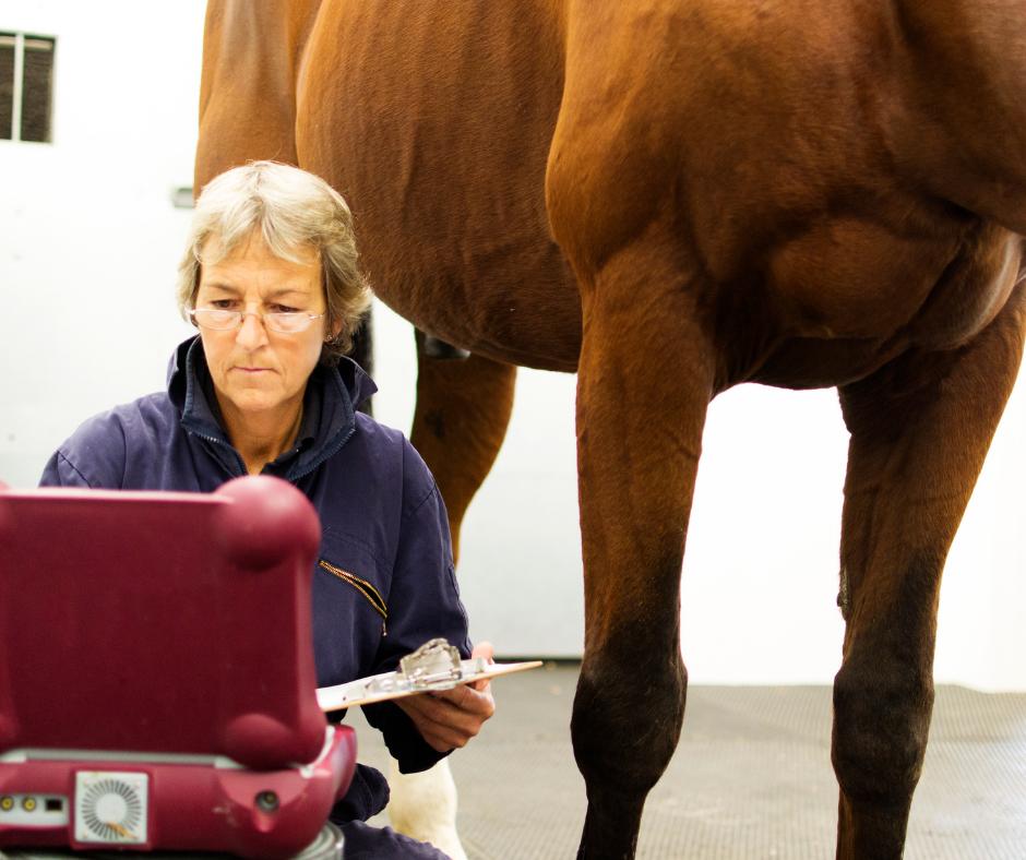 animal psychology 1 I Love Veterinary - Blog for Veterinarians, Vet Techs, Students