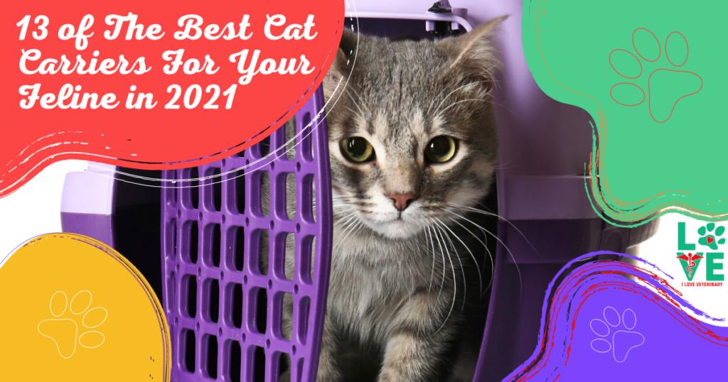 best cat carriers