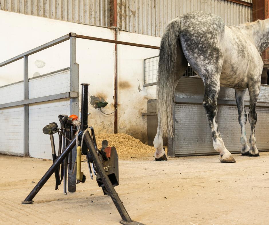 farrier horse shoe kit