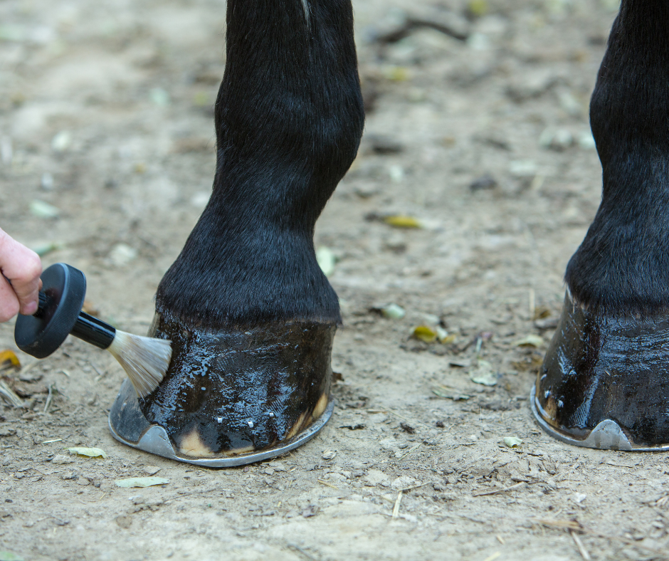 hoof oil being applied to horse hooves