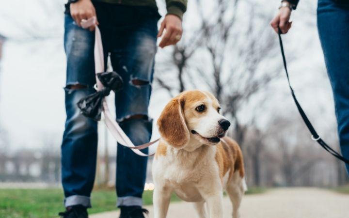 Untitled design 62 I Love Veterinary - Blog for Veterinarians, Vet Techs, Students