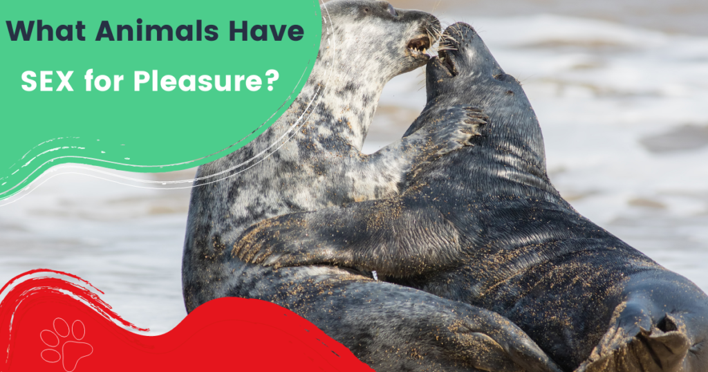 what animals have sex for pleasure
