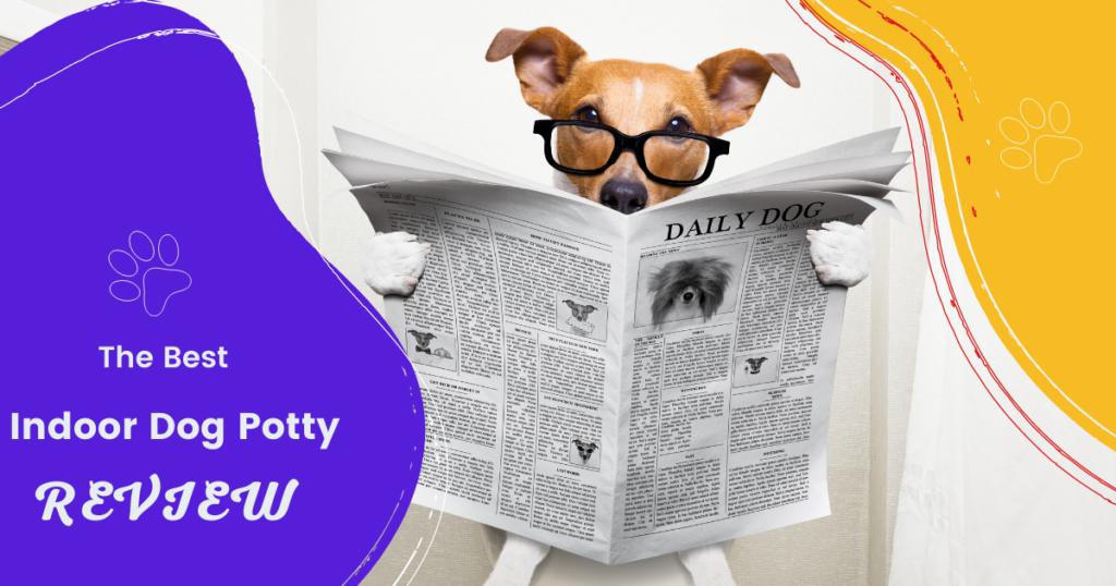 best indoor dog potty